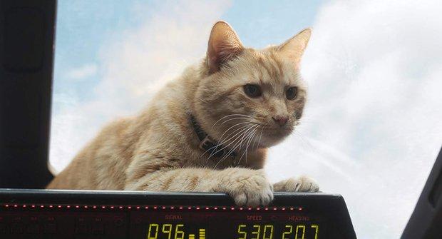 Kočičí záhada filmu Captain Marvel