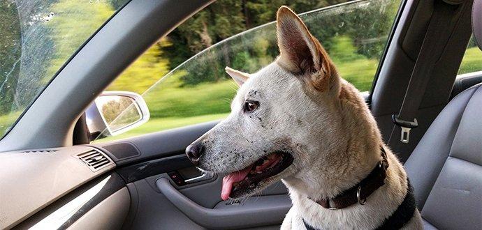 Připravte se na cestování se psem
