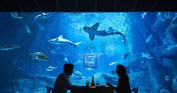 Je libo večeři mezi žraloky?