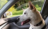 Pripravte sa na cestovanie so psom