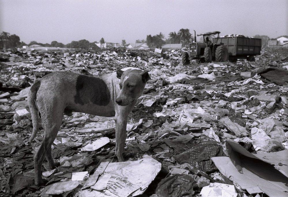 Gambie, Banjul, smetiště