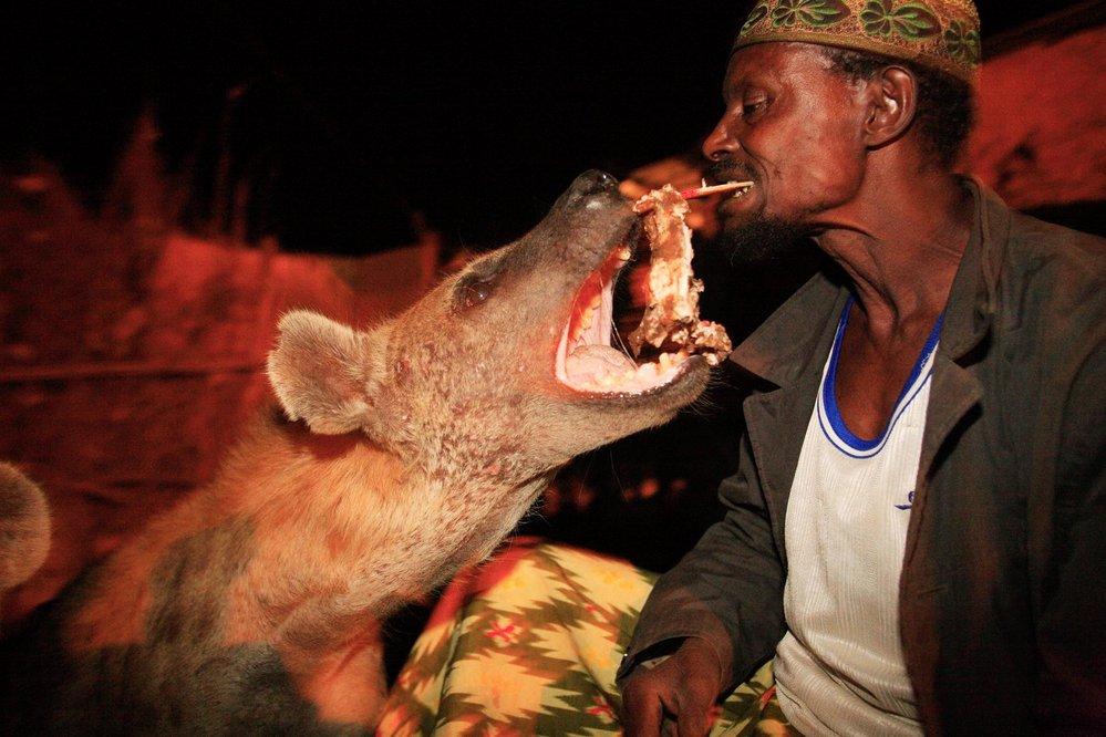 Etiopie, Harar - hyení muž