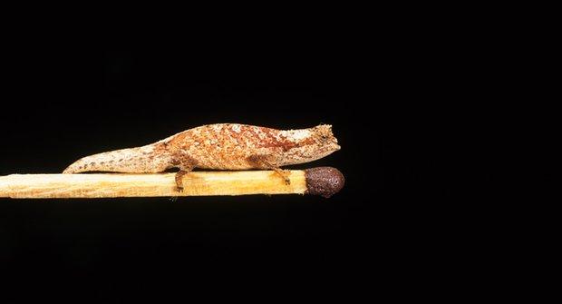 Ostrovní efekt: Líheň obrů a trpaslíků