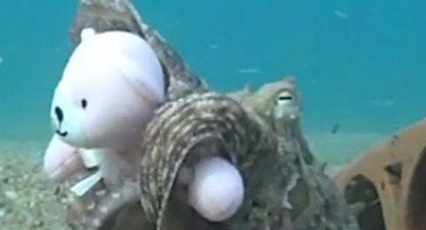 Svědectví filmového pásu, aneb medvídek pro chobotnici