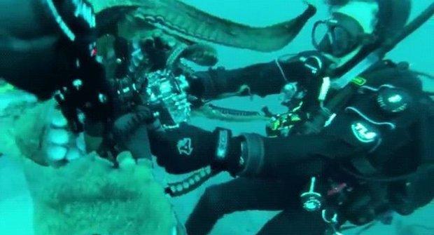 Potápěč versus obří chobotnice, která se prostě NECHCE fotit!!!