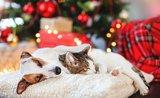 Nezabudnite na Vianoce na štvornohých miláčikov