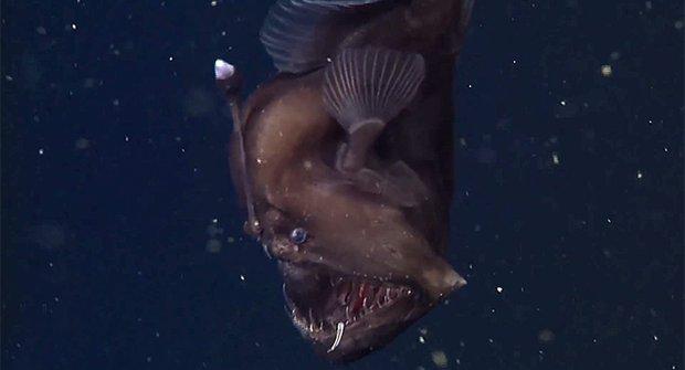 Skutečné monstrum: Ďas z temných hloubek je zblízka totálně děsný