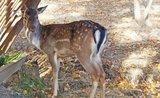 Plňte krmelce s rozvahou: co naservírovat divokým zvířátkům