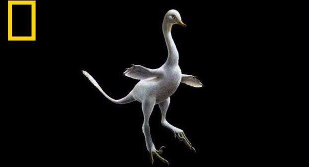 Obojživelný dinosaurus chodil jako kachna