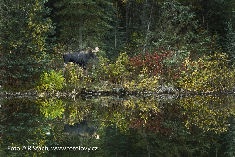 Los kanadský. Britská Columbie, Kanada