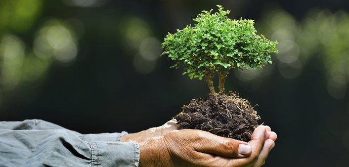 7 způsobů, jak chránit životní prostředí
