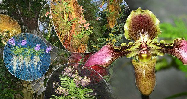 Výstava orchidejí ve skleníku Fata Morgana.