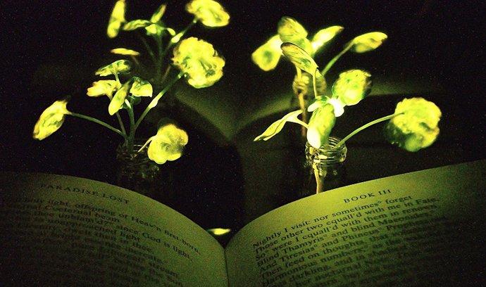 Fluorescenční rostlina