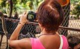 Chystáte se do ZOO? Poradíme vám, jak nejlépe fotit zvířata.