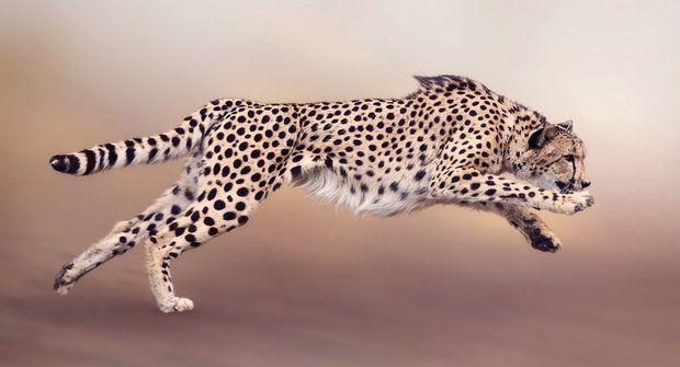 Jako gepard: Nejrychlejší měkký robot světa