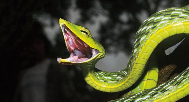Očima hada: Tajemství hadích smyslů