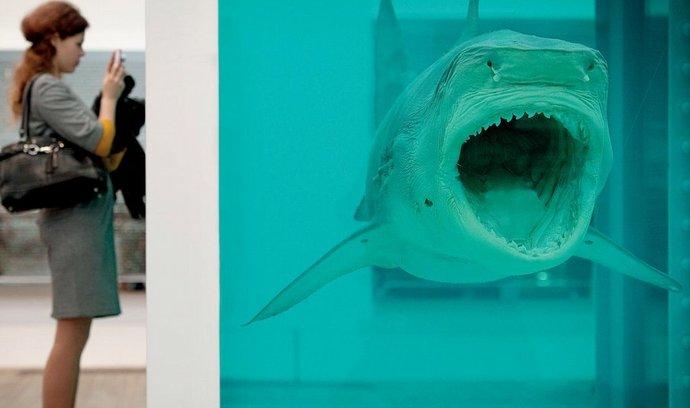 Hirstův žralok si svůj věčný spánek užívá v akváriu o rozměrech 213 × 518 × 213 cm.
