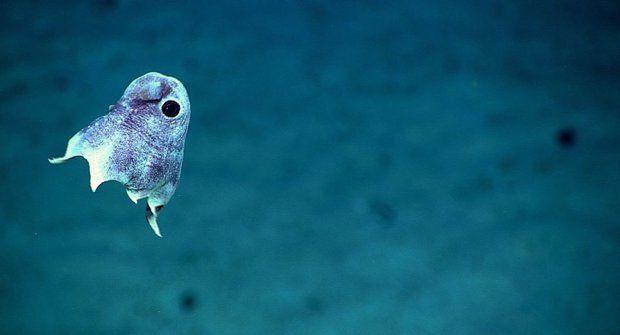 Obyvatelé oceánských hloubek si sami svítí
