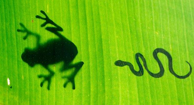 Potravní řetězce: Kdo koho v přírodě sežere?