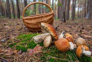 Jak správně usušit houby, aby nezplesnivěly