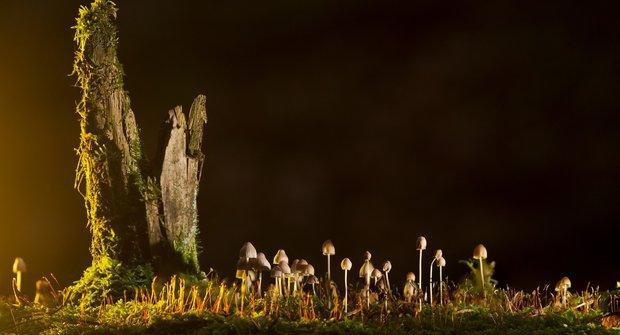 Ani rostlina, ani živočich: Jak houby vládnou Zemi
