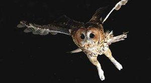 Jaké sovy u nás žijí? Největší a nejobávanější tajuplní noční ptáci