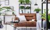 Izbovky do boja! Dajte si domov rastliny, ktoré čistia vzduch