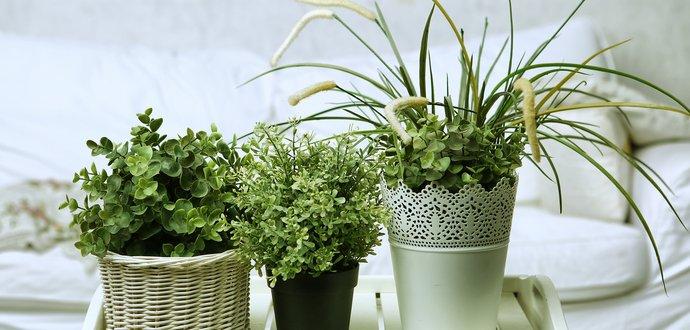 Čo sa vám snaží rastlina povedať svojimi listami?