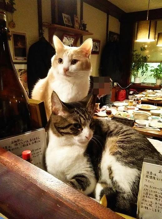Pokud si chcete užít noční život v Tokiu a vyzkoušet si trošku toho japonského bizáru, můžete zavítat třeba do baru Neko Akanasu, který je vůbec prvním podobným podnikem na světě s kočkami.