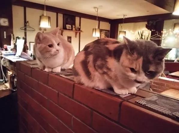 V Japonsku se na opilost nenahlíží příliš pozitivně, a tak se nedá očekávat, že by kočky obtěžovala banda víc než ovíněných zákazníků hospůdky.
