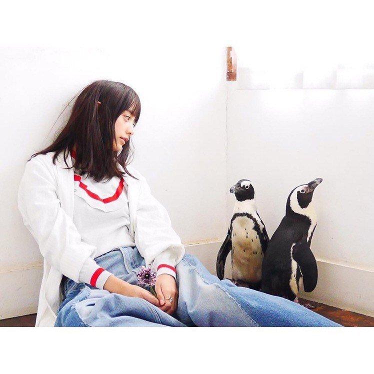 Kromě kočičího baru v Tokiu najdete i podnik s tučňáky.
