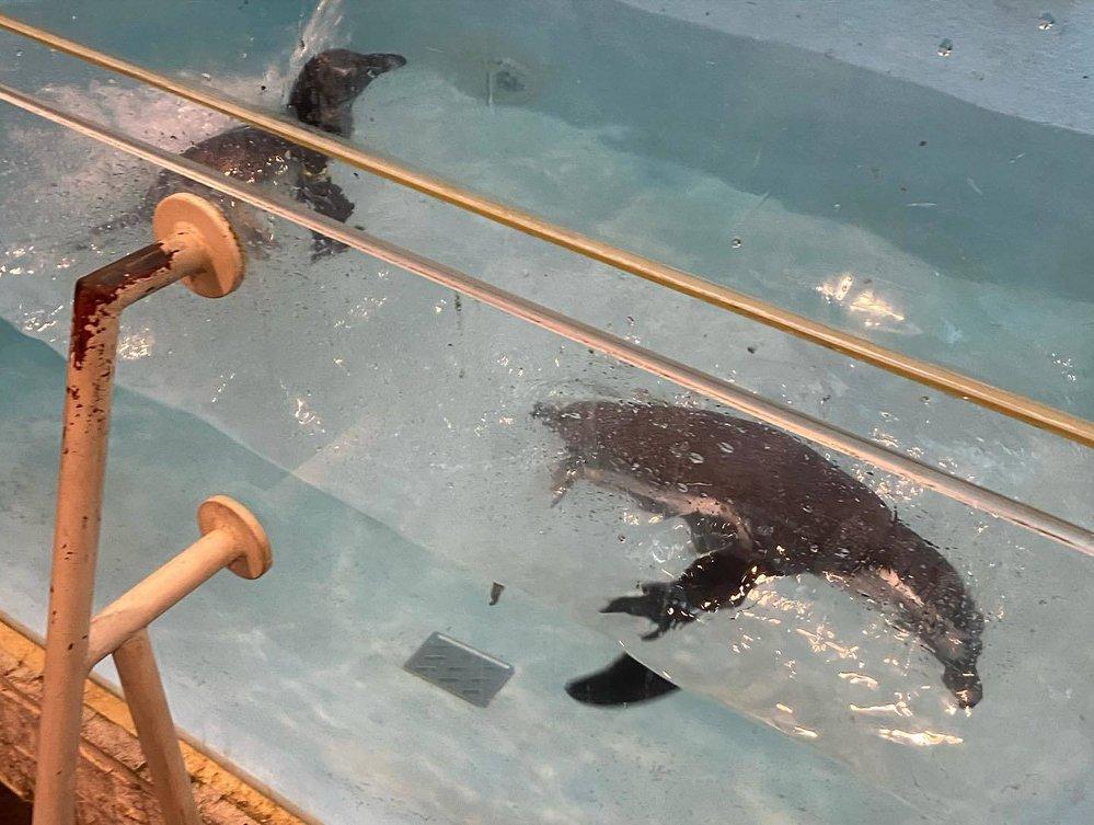 Pravidla pro chov divokých zvířat jsou v Japonsku nesmírně přísná a tito vypadají, že je o ně dobře postaráno, přesto je celý tento koncept už dost přes čáru...