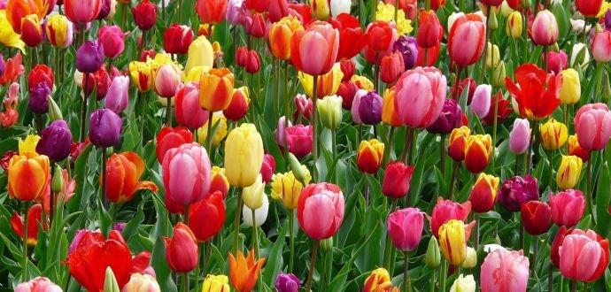 Jak pečovat o jarní květiny v květináčích
