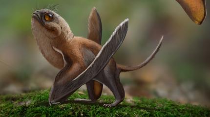 Sinomacrops měl tělé velké jako vrabec, jinak připomínal křížence netopýra, veverky a žáby