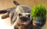 Kila navíc zkracují kočkám život