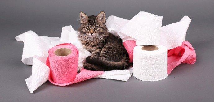 Kam i kočky chodí samy. Vyřešte všechny obtíže s kočičí toaletou