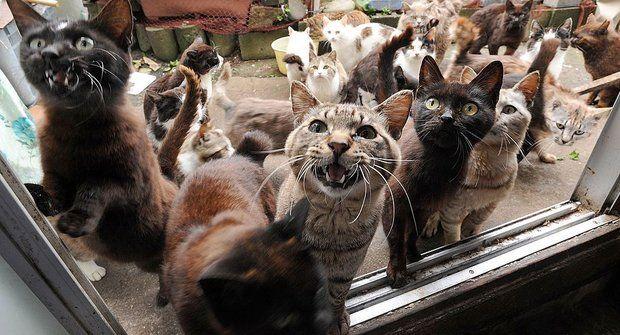 Podivuhodná místa: Ostrov plný koček