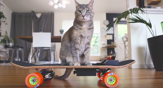 Skate pro kočku: Video návod na vlastní DIY vychytávku