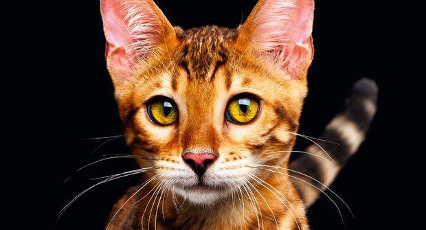 Bohyně našich domovů: Odkud přišly kočky?
