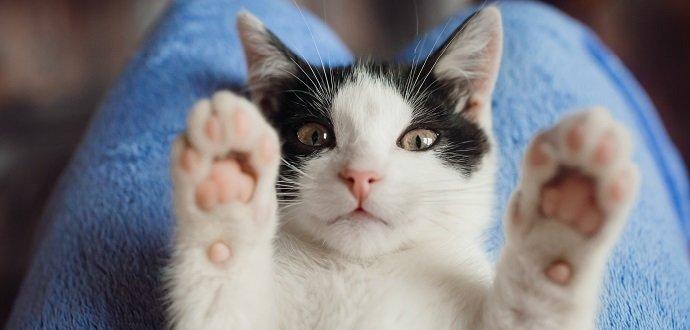 Plán krmení: od koťátka po velkého kocoura