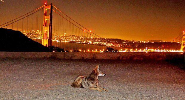 Divoká zvířata kolem nás a divoši ve městech