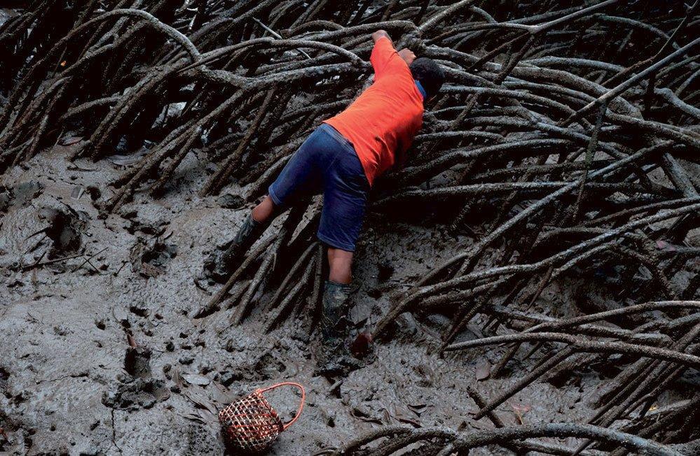 Zhruba 15-20 procent mušlí se prodává na domácím trhu, 80 procent produkce směřuje do sousedního Ekvádoru.