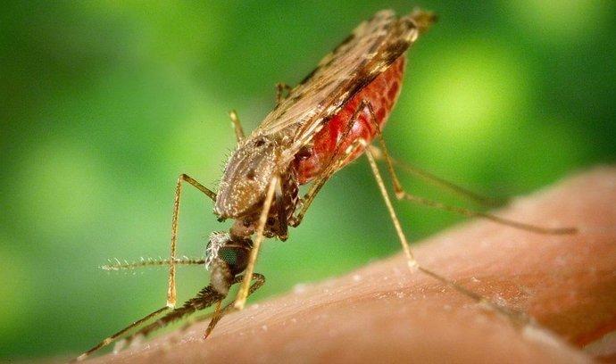 Komár Anopheles, přenašeč malárie