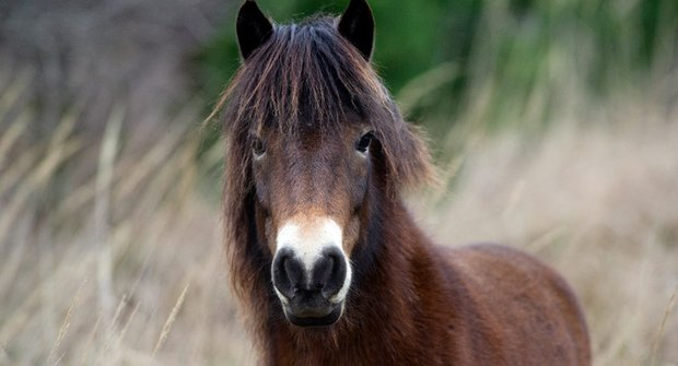 Safari na blátě: Jak jsme potkali divoké koně