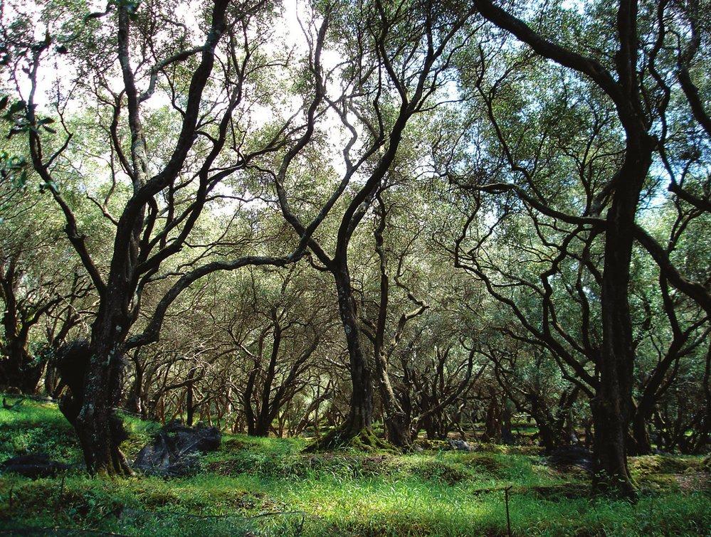 Zdejší příroda byla pro budoucího přírodovědce zdrojem mnoha zážitků