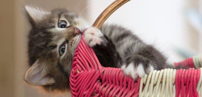 Kotě: nový člen domácnosti