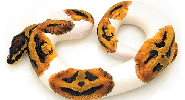 Strašidelný král hadů