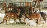 Čím (ne)kŕmiť divoké zvieratá