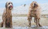 Jak psovi vyberete kvalitní granule? Vsaďte na méně složek