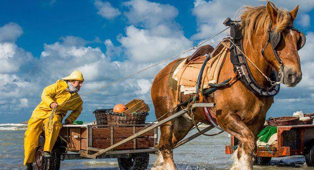 FOTO ABC: Rybařící koně